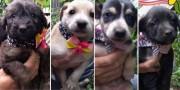 Pet: filhotes para adoção