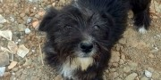 Cachorrinha abandonada aguarda novo lar