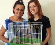 Coruja é salva no Centro de Içara e tem chances de recuperação
