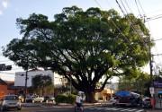 Ecossistemas Urbanos será o foco do Seminário da Unesc
