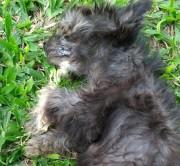 Envenenamento de cão causa revolta em rua do Bairro Cristo Rei