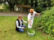 Epagri inclui ora-pro-nóbis em cestas básicas oferecidas ás famílias de SC