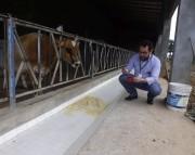 Epagri de Araranguá realiza curso de homeopatia agropecuária