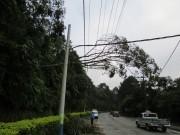 Vegetação na rede é a principal causa de falta de energia