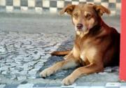 Cuidados com animais devem ser redobrados em dias de calor