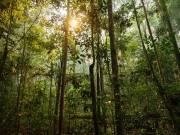Semana Acadêmica da Unesc debate temáticas ambientais