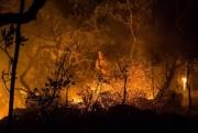 Veterinários voluntários atendem animais atingidos por incêndio na Chapada