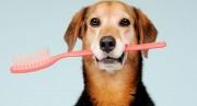 Mau hálito pode indicar outras doenças em animais de estimação