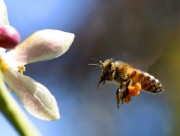 Epagri lança sistema tecnológico inédito no Brasil para apoiar apicultura