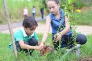 Clube Nossa Horta promove plantio de árvores