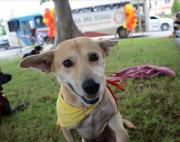 Ong investe em mutirão para reduzir número de animais de rua