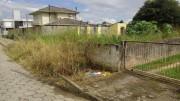 Vegetação está impedindo o acesso dos pedestres