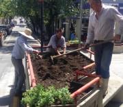 Equipe do Horto Florestal planta flores no Centro de Içara