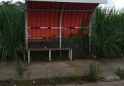 Abrigo de ônibus se esconde no mato na Vila São José