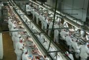 Santa Catarina amplia exportações de carnes em maio