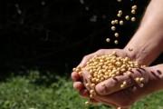 Agronegócio responde por 66% das exportações catarinenses