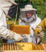 Conheça a técnica pode gerar mais competitividade no setor apícola