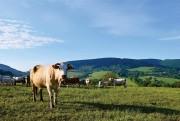 Conferência de Manejo de Pastagem no Unibave