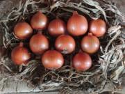 Epagri lança novo cultivar de cebola na sexta em Ituporanga