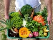 Clube Nossa Horta terá feira de produtos orgânicos