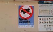 DNIT/SC e consórcio retomam ações sobre riscos de animais em pistas