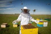 Conheça formas de unir produção apícola ao turismo rural