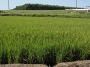 Produtor rural já pode contratar o seguro granizo para safra