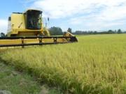 Evento em Forquilhinha dá início a colheita de arroz