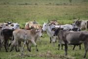 Cidasc completa 37 anos trabalhando pela Defesa Agropecuária