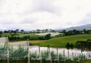Projeto leva alunos à campo para conhecer produção em vinícolas