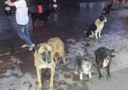 Grupo de cachorros se reúnem em frente ao supermercado
