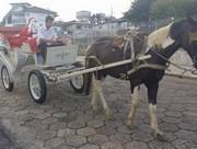 O bom velhinho percorre de charrete as ruas de Içara