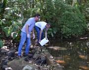 Siderópolis aplica larvicida biológico em rios