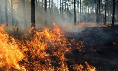 Famsid alerta: queimada é crime ambiental