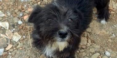 Cachorrinha abandonada aguarda novo lar; adote!