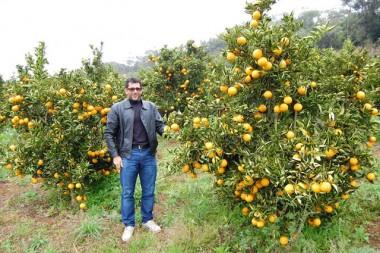 Produção de laranjas traz mais renda para agricultores