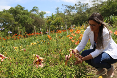 Içara: Dedicação e criatividade marcam projetos de jardinagem e paisagismo