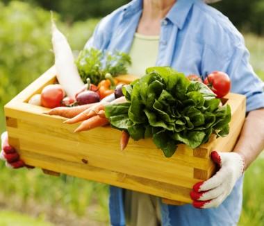 Urussanga receberá primeira Feira da Alimentação Saudável