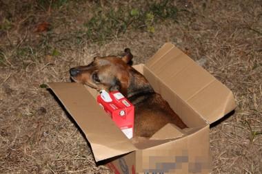 Animais São Envenenados Na Zona Sul Do Rincão