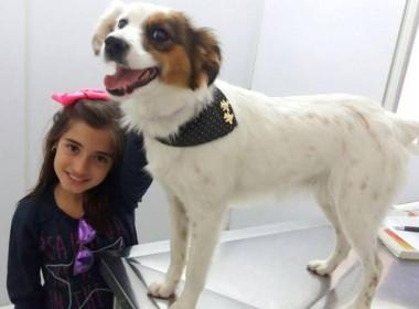 Mutirão de castração de cães e gatos a preço de custo