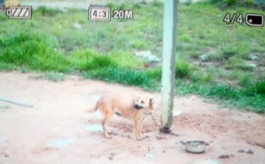 Polícia Civil resgata cão por maus tratos em Balneário Rincão