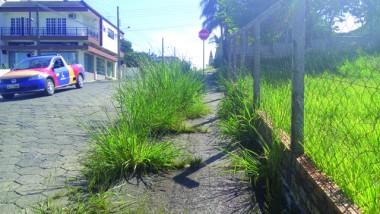 Vegetação invade mais uma rua no Centro de Içara