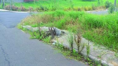 Vegetação invade calçadas nos bairros de Içara