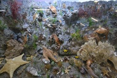 Novos encantos marinhos chegaram no Museu de Zoologia da Unesc
