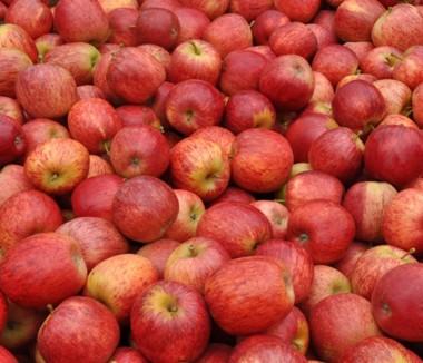 Índia autoriza importação de maçã fresca de Santa Catarina