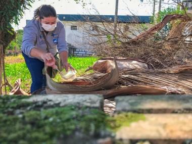 Vigilância Epidemiológica encontra 12 focos de dengue na cidade de Içara