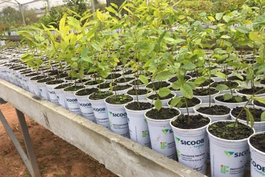 Projeto ambiental do Sicoob Credija completa dois anos