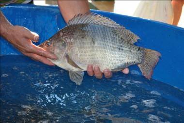 Jacinto Machado terá feira do peixe vivo na Quinta-Feira Santa