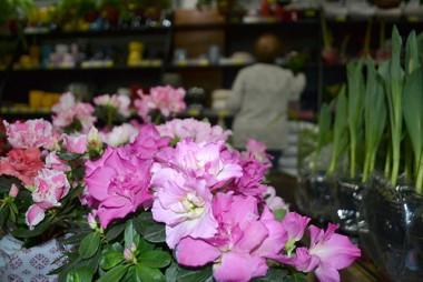 Bistek oferece mais de 300 tipos de flores e plantas