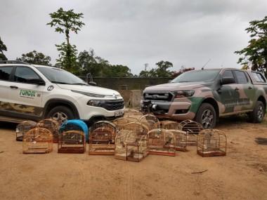 Denúncia leva a Fundai e Polícia Ambiental a resgatar 21 pássaros silvestres